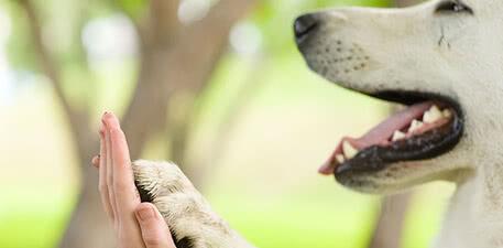 MOSER® помогает животным по всему миру